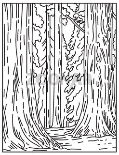 Groves of Giant Sequoias or Redwoods in Sequoia National Park in Sierra Nevada in California United States Mono Line or Monoline Black and White Line Art
