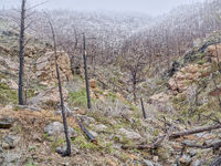 Forest burned by recent wildfire in the Poudre Canyon
