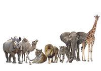Group of animals isolated on white background.