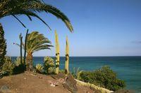 Palmen am Meer am Abend