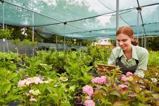Junge Gärtnerin fotografiert Blumen mit Tablet PC