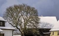 Der Baum im Bauernhof