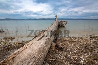 Toter Baum am Ufer des Ammersees