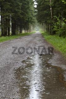 Waldweg bei Regen mit Pfütze, Bayern