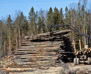 Operations for loading a logging truck