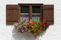 Schöne Blumen im Fenster am Linderhof