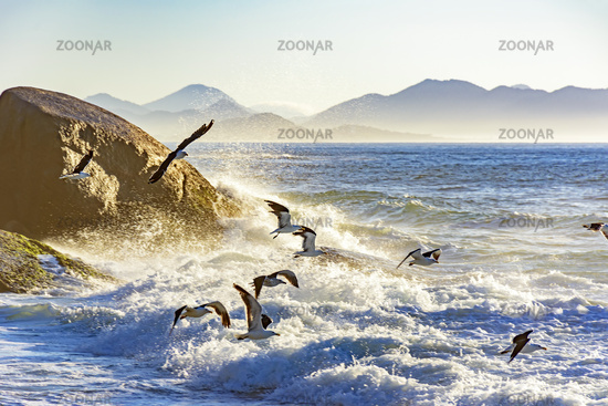 Seagull flying at dawn over the sea and rocks