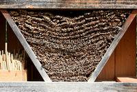 Insektenhotel, Wildbienen