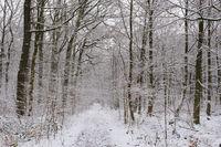 Weg durch den verschneiten Buchenwald