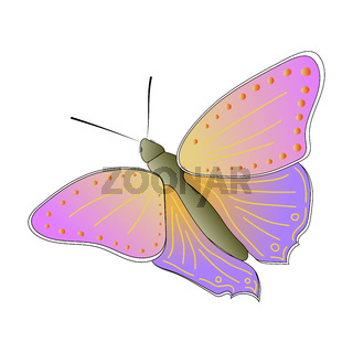 Colorful butterfly isolated on a white background. Top view. A multicolored butterfly with a beautiful pattern on the wings. Vector EPS10.