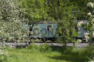 Apfelbaum mit Zug