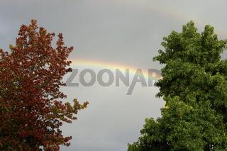 Herbst Regenbogen zwischen Baeumen