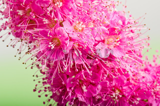 Beautiful pink flower, close-up