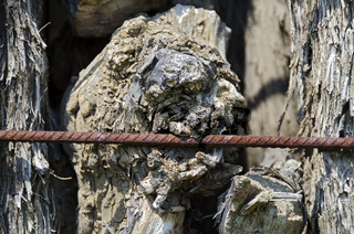Knorriger Weinstock in Form eines Kopfes