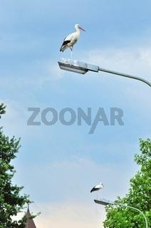 Straßenlampen der Störche