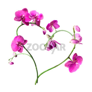heart from pink orchids isolated on white