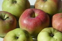 20210929_Malus domestica Brettacher, Apfel, apple003.jpg