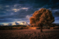 infrared tree and snowy high mountains in the background