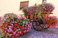 Schöne Blumen im Hof