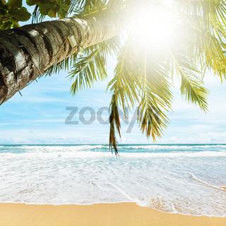 Tropical beach. Square composition.