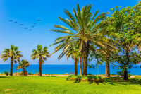 Island in the Southern Mediterranean. Tall slender palm trees and well-groomed green grass lawns. Flock of migratory birds
