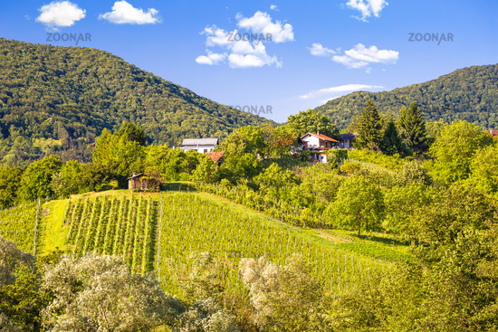 Picturesque green hills and vineyards of Plesivica view
