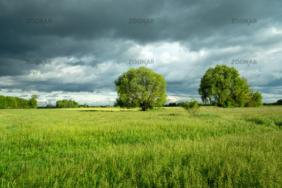 Trees growing on a green meadow and cloudy sky