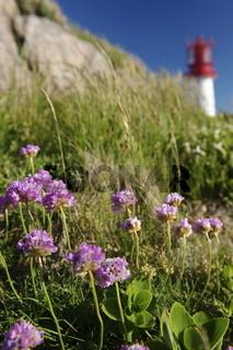 Blumen vor Leuchtturm
