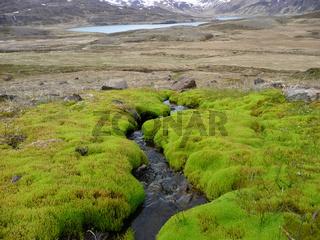 Bach in Island mit Thermalwasser