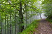 Old road in misty forest