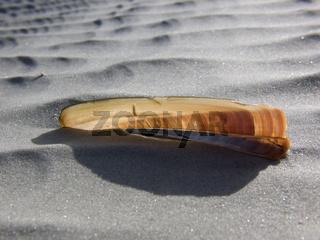 Schwertmuschel am Strand - American jackknife clam