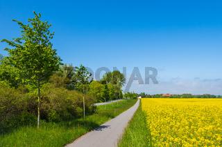 Rapsfeld, Radweg und Straße mit Bäumen bei Parkentin