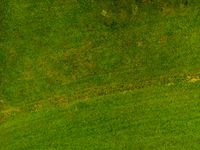 Background of grass and pasture shot from above with a drone. Background with copy space!