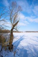Schneelandschaft mit Bäumen im Winter an einem See bei Magdeburg