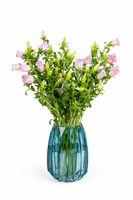 pink campanula champion in glass vase