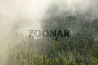 Misty forest in a valley covered with fog