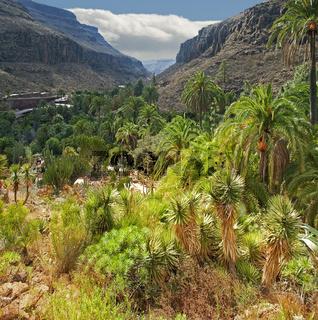 Tal von Los Palmitos auf Gran Canaria
