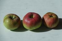 20210929_Malus domestica Brettacher, Apfel, apple004.jpg