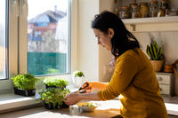 Woman cutting microgreens at the kitchen in the morning