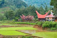 Weiler mit Tongkonan Haus und Reisspeicher in den Bergen von Tana Toraja