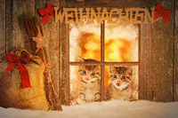 Two young kitten looking curiously out of a window