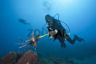 Taucher vernichten invasive Rotfeuerfische