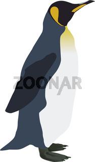 Pinguin schaut nach links