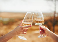 Friends clinking glasses with white wine during picnic