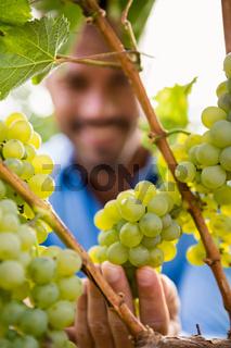 Close-up of man touching grapes