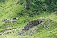 Haflingerpferde in Tirol, Bergheim Egghoff Kaser, Italien, Südtirol