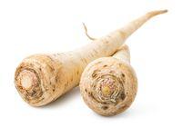 Parsley root close up