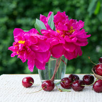 Large cherries and red peony in water glass isolated on green.