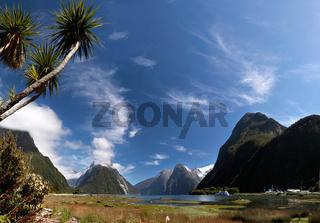 Palmen im Milford Sound in Neuseeland