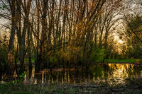 flooded fields at sunset